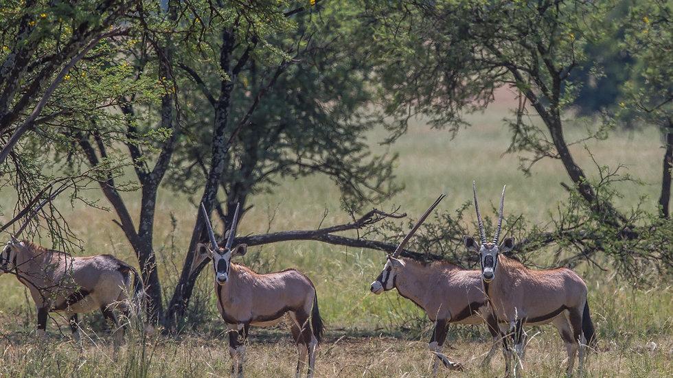 Namibia, Plainsgame 1