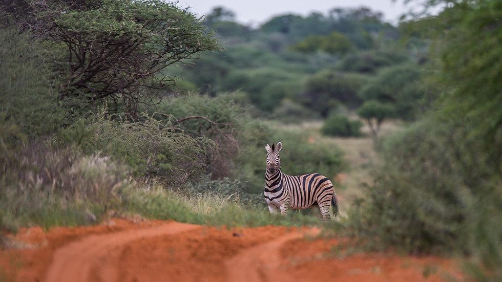 Sydafrika, Plainsgame 3