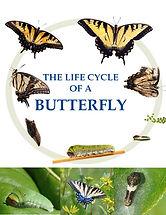 life_cycle.jpg