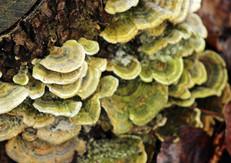 AdobeStock_342316831-fungus michelle pat
