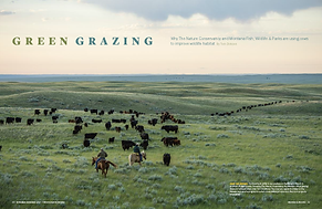 GreenGrazing - cover.png
