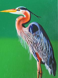 Great Blue Heron_Ian MacIntyre (002).jpg