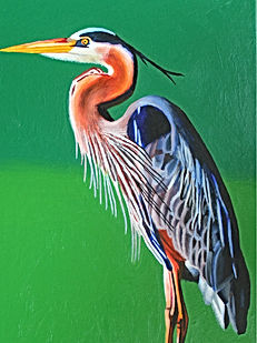 Great Blue Heron_Ian MacIntyre (002).jpg