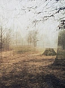 Middleton_Twilight_series-1.jpg