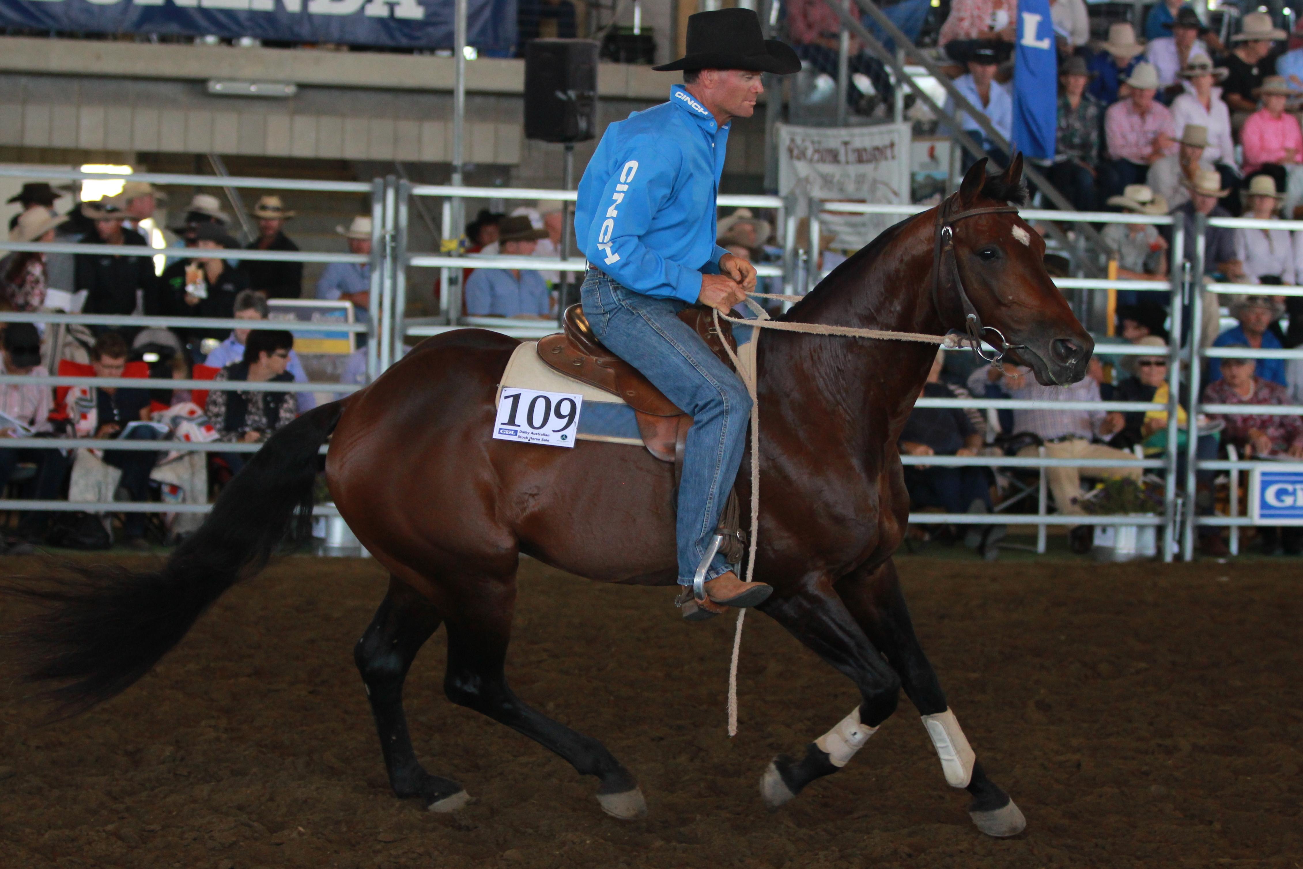 LOT 109 Top Priced Stallion  2015 IMG_9908.1
