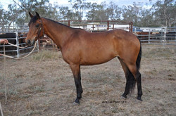 Lot 5 - Fever Pitch