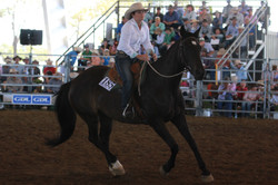 LOT 185 Top Priced Horse 2015 IMG_1065.1