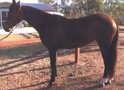 Lot 28 - Oneofakind Dixie Chic