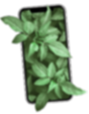 leafphone newest.png
