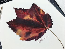 Starting a leaf series! Trying to take a