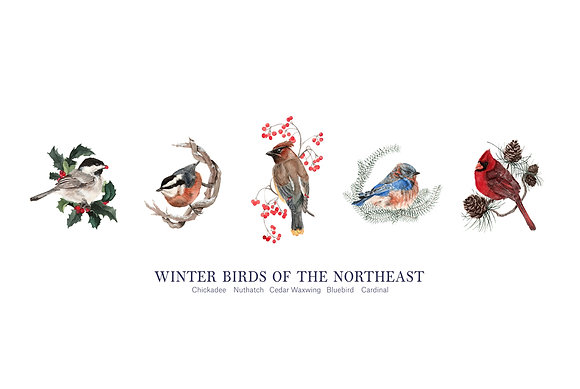 Winter Birds Print