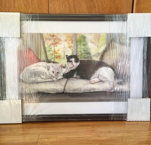 Cats Framed