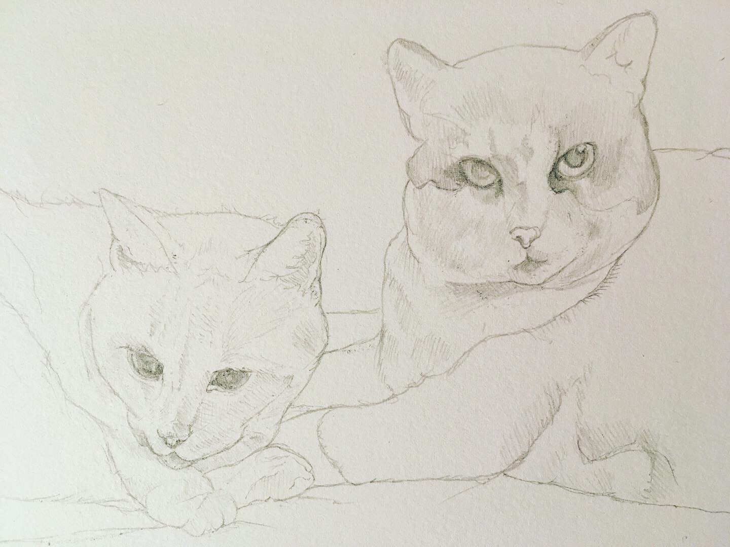 Cats in Progress