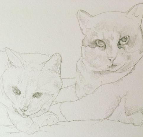Cats in Progress
