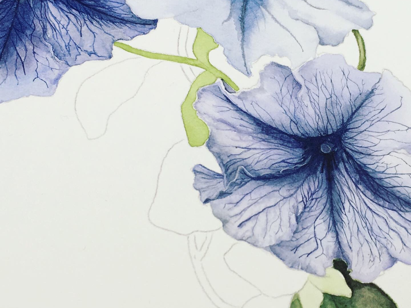 Petunias in Progress