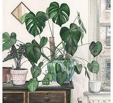 plantloverweb.jpg