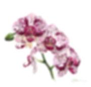 orchid3sm copy.jpg