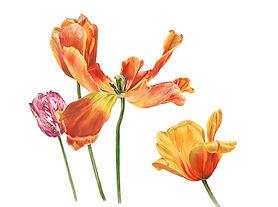 Tulipssmall.jpg