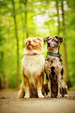 Duo canin