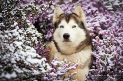 Douceur d'hiver