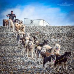 Lounoock's chiens de traîneau