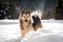 Horizons d'hiver