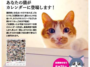 2016年ふくおかの猫カレンダーの作成が決定!