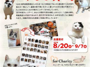 365日のふくおかの猫カレンダー2019年版