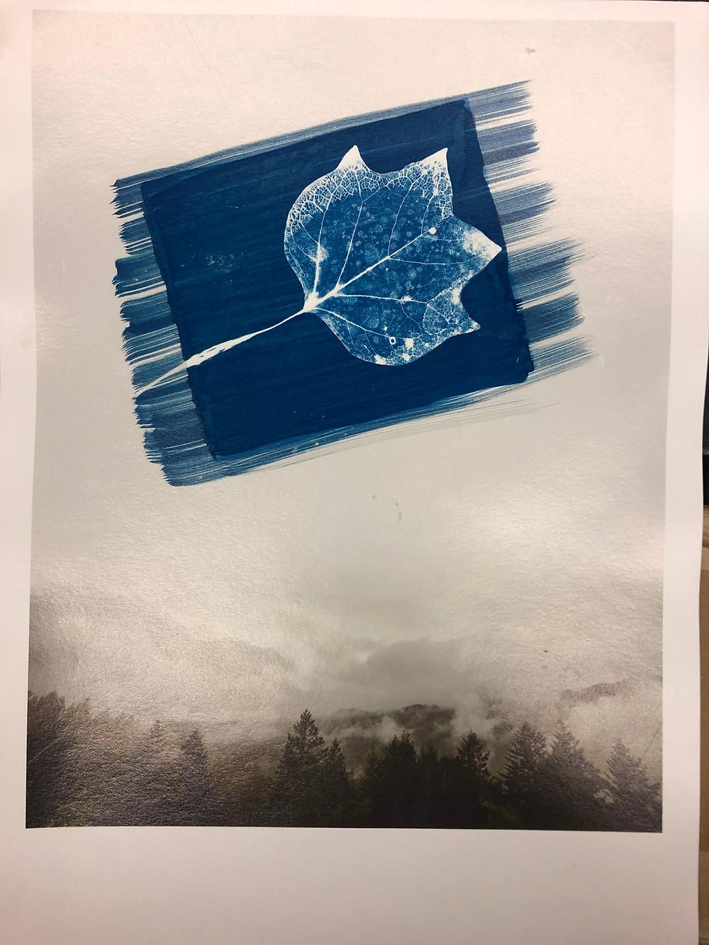 Cyanotype + Inkjet with Brush marks