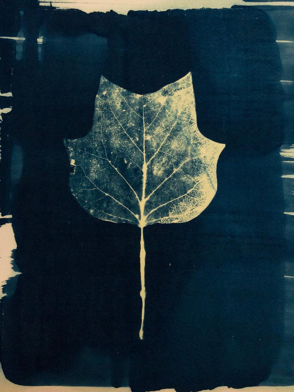 cyanotype print of  leaf skeleton