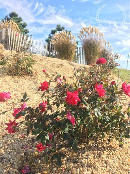Oct Rose.JPEG