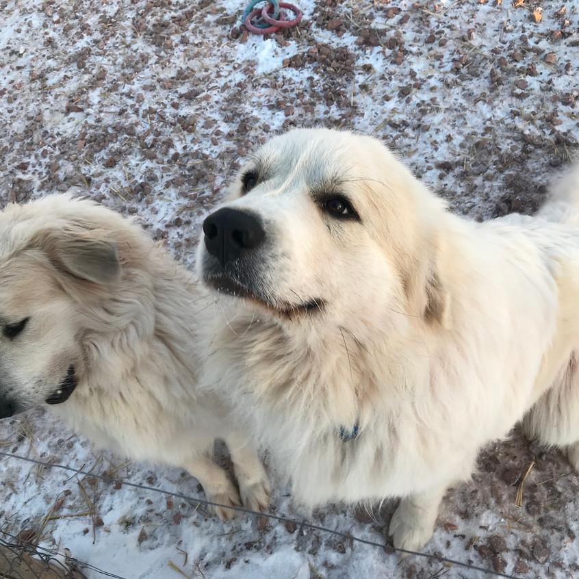 Sadie and Badger