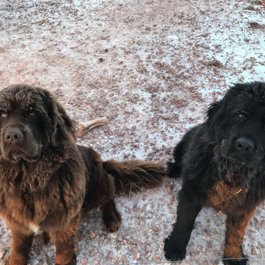 Hershey and Jet