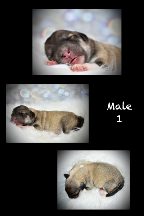 Lady and Duke have a litter!