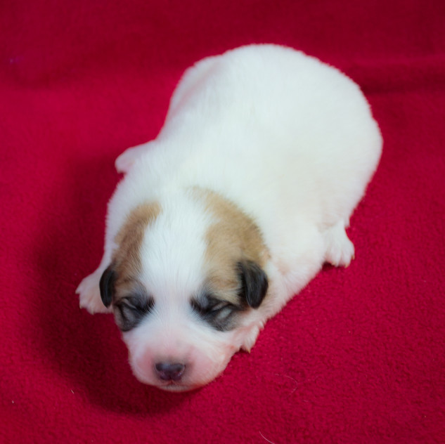 Litter 2 - Week 1 - Male 7