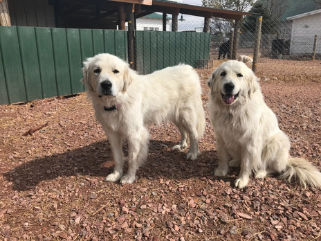 We would like to welcome Luna and Lady!