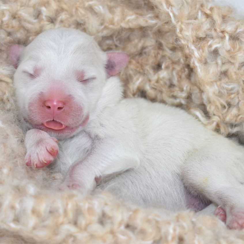 M5 Newborn