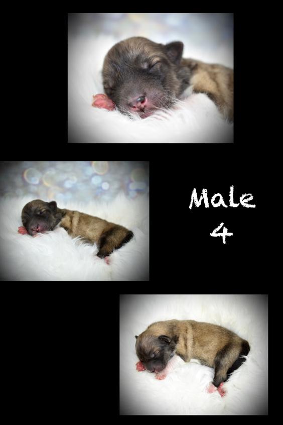 Male 4 Birth