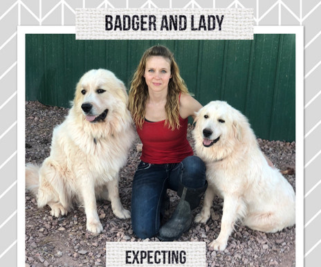 Puppies on the way!