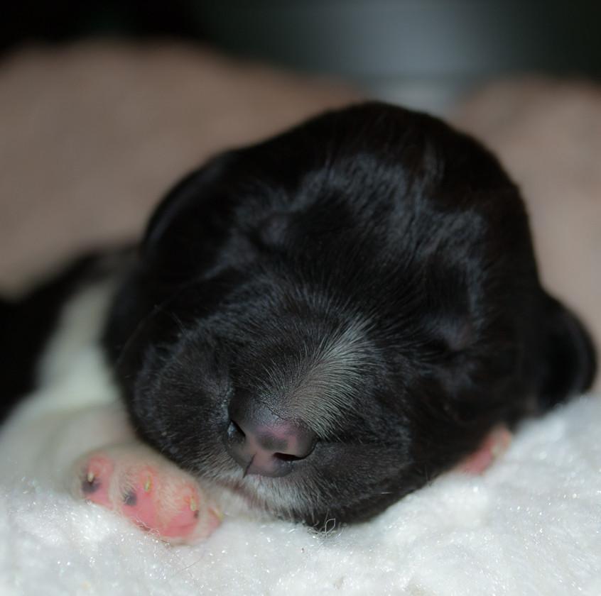 Litter 1 - Newborn - Male 5