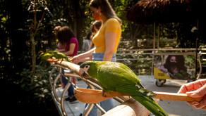 Parque das Aves, em Foz do Iguaçu, atinge marca de 10 milhões de visitantes!