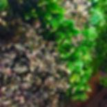 foto jardins verticais artificiais