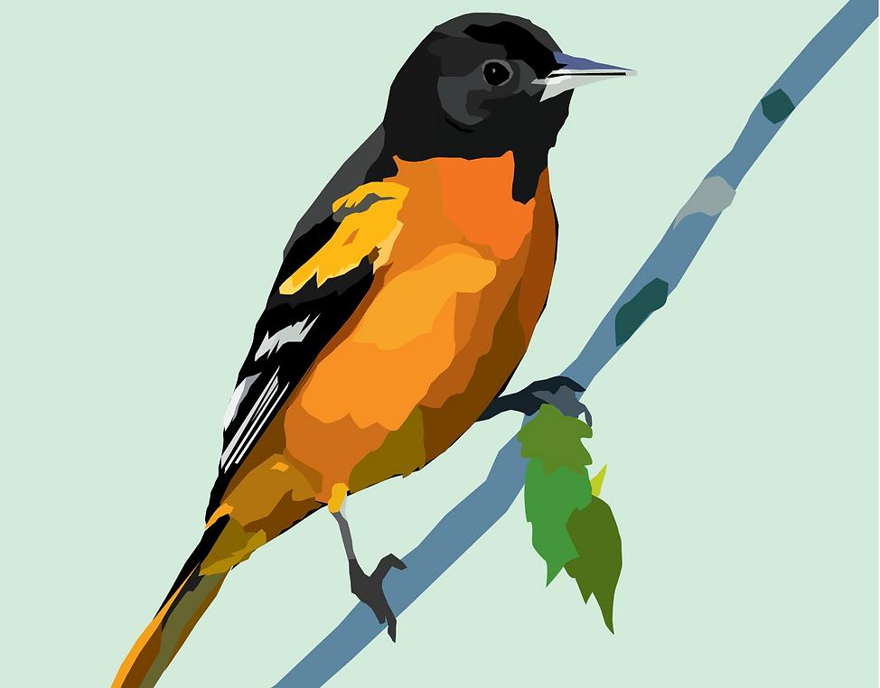 erika-9-bird2.png