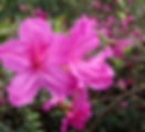 2020 Mead Botanical Garden - Winter Park
