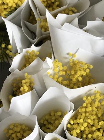 Promo Flower Concept for L.A Signorina