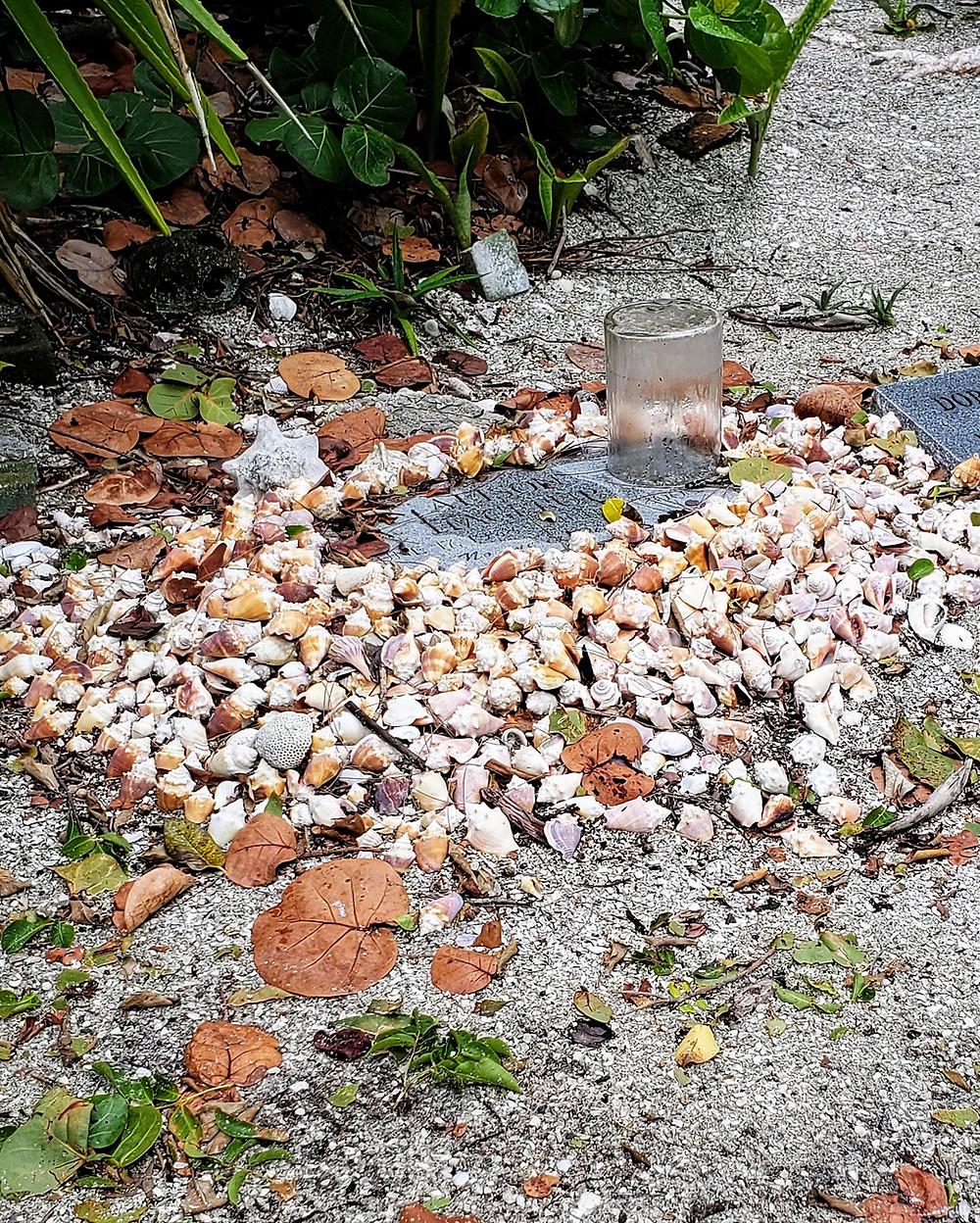 Shells in Captiva