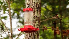 The Hummingbird, Wilder TN 2021