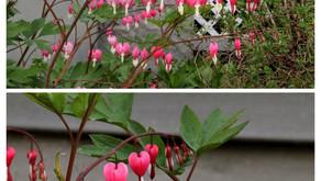 Springtime Blossoms 2021