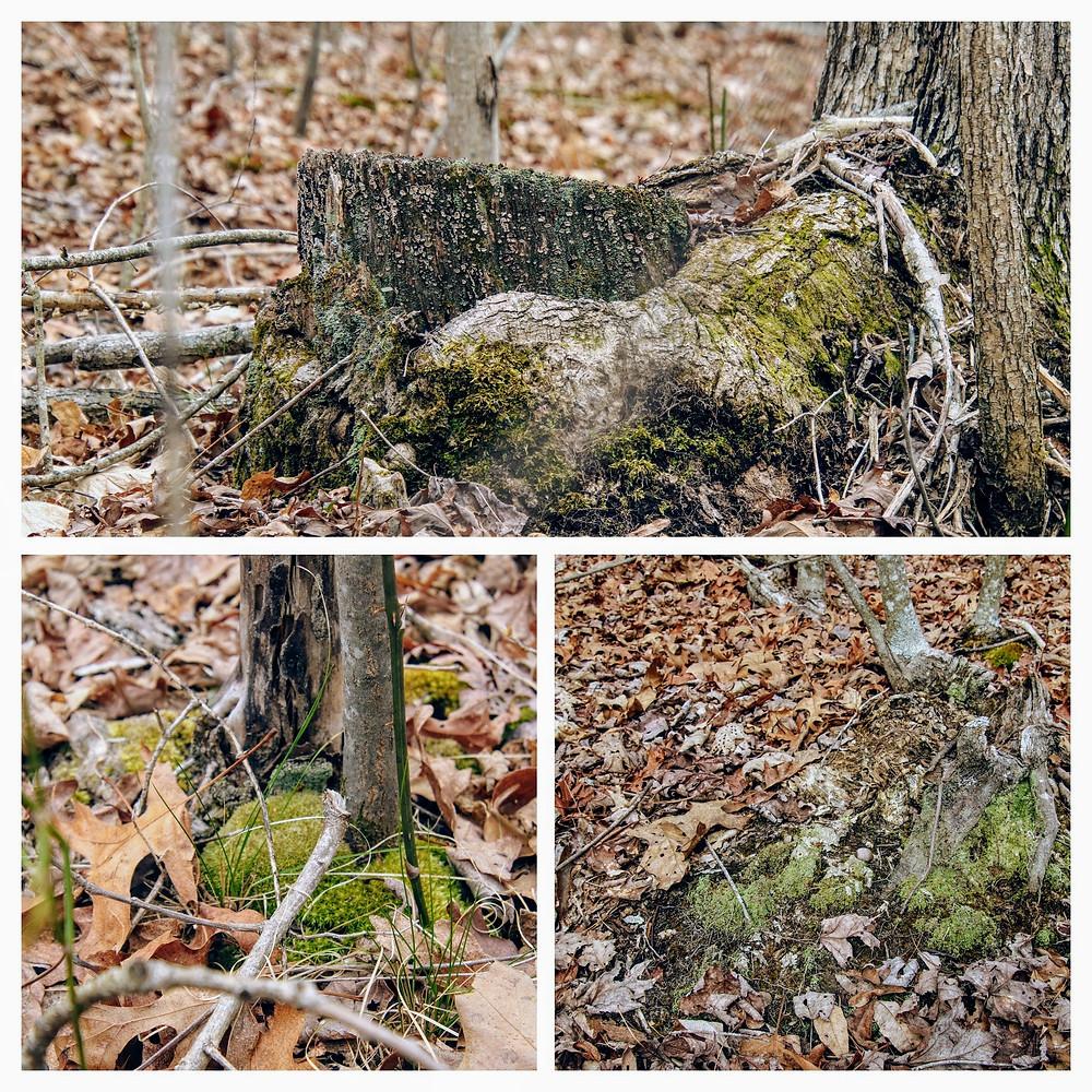 Surrounding Tree Bases