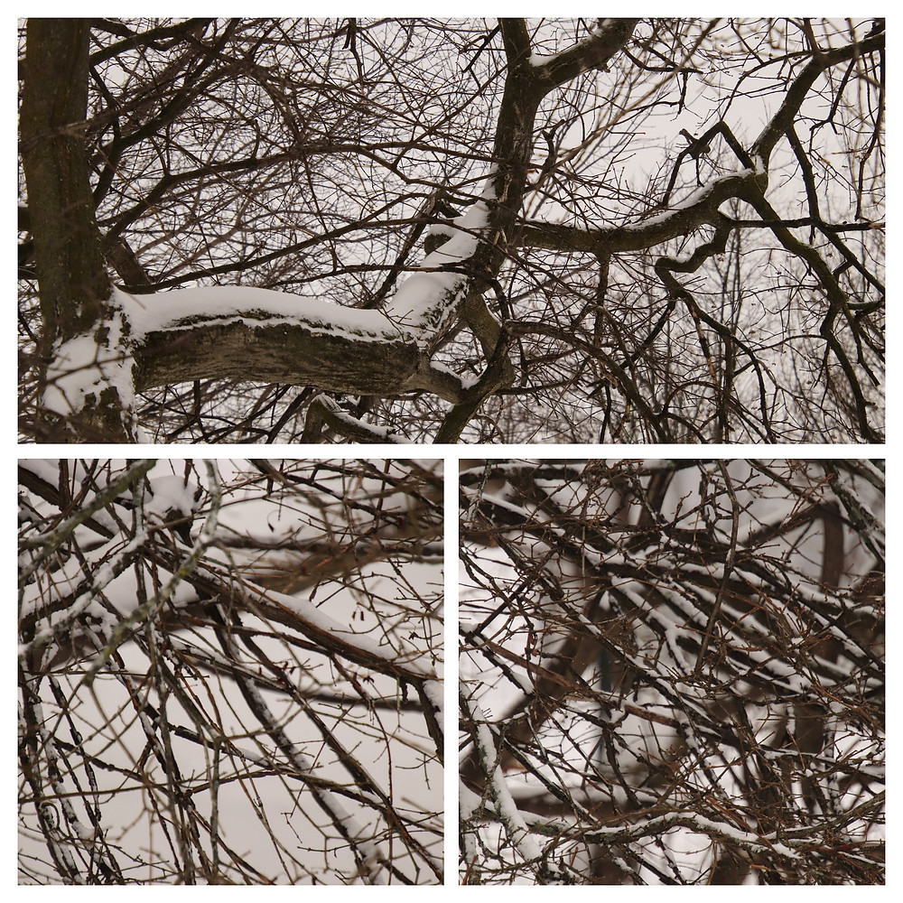 Snow Covered Bare Branches